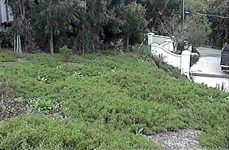 Pigeon Point on an installation in Malibu, no irrigation. You really do not need much irrigation. This was a full blown Coastal Commission mitigation we did and they included it on their tour. - grid24_12