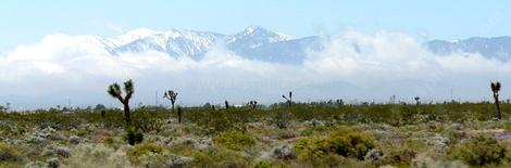 The melting snow was creating fog along the east side of the transverse ranges in the Joshua Tree Woodland north of Lancaster. - grid24_12
