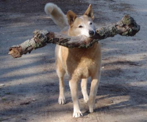 Carry a big stick and bark softly. Can't bark loud because of stick... - grid24_12