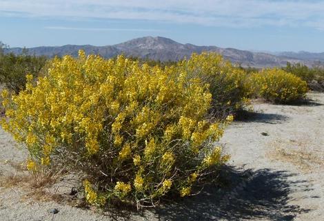 Native Plant Habitats Of California