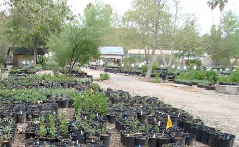 The public section of our Escondido plant nursery. All we grow are native plants. - grid24_12