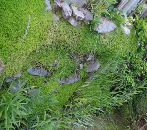 This wall has been in one of the greenhouses for thirty years. - grid24_12