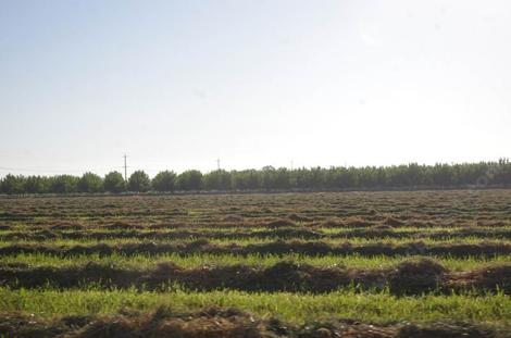 A field of cut hay south of Lemoore - grid24_12