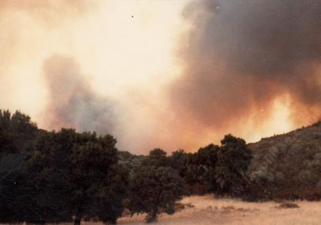 The fire that burned all the manzanitas(the gray spots) behind Las Pilitas nursery in 1979. - grid24_12