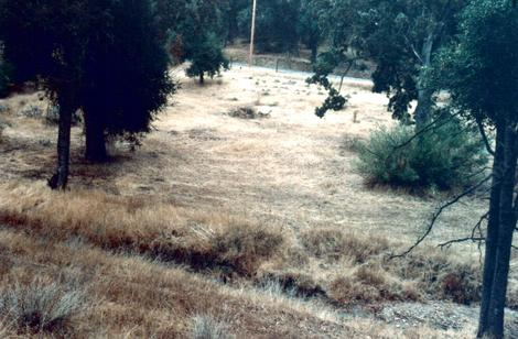 One of the fields at Las pilitas nursery in 1992 - grid24_12