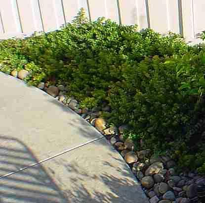 a manzanita path in poway many of the manzanitas do well in a sountherh california - Garden Examples Photos