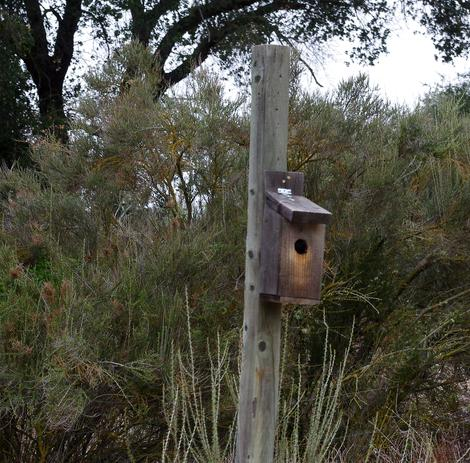 This bird house was used by the Western Blue Birds one year, a Ash Throated Flycatcher the next. - grid24_12