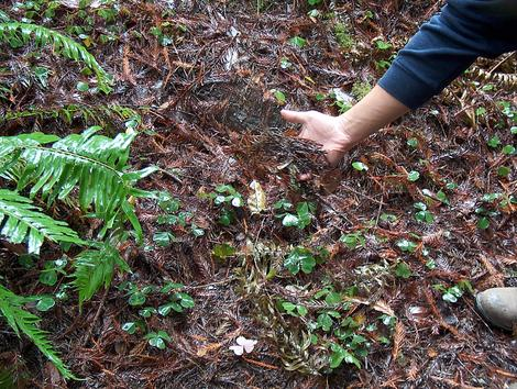 Pictures of the redwood forest of california and some of for Living things found in soil