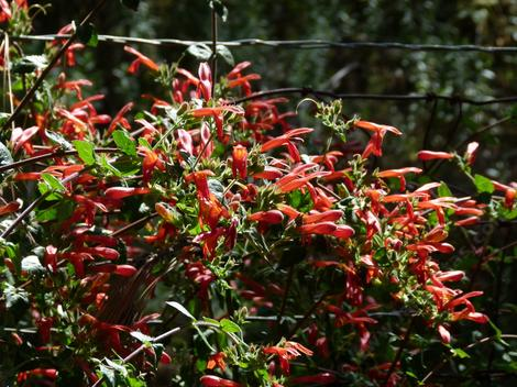 There are some pretty native plants growing in Southern California. - grid24_12