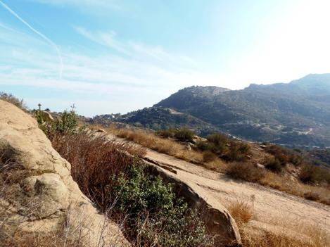 The weedy chaparral of the Santa Susana Mts. Every time it burns it gets a little worse. - grid24_12