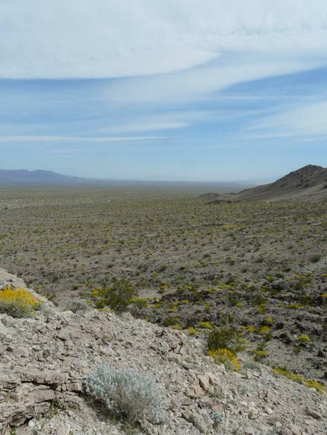 Salvia funerea. Death Valley Sage bush overlooking the  Eastern Mojave Desert - grid24_12