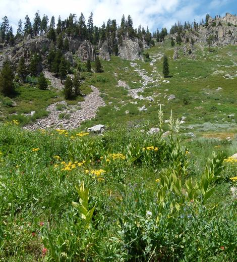 Another view of a Sierra meadow at about 8000 ft. - grid24_12