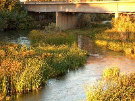 The Salinas River with Tules - grid24_12