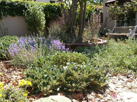 A Los Angeles native garden after 6 months. - grid24_12