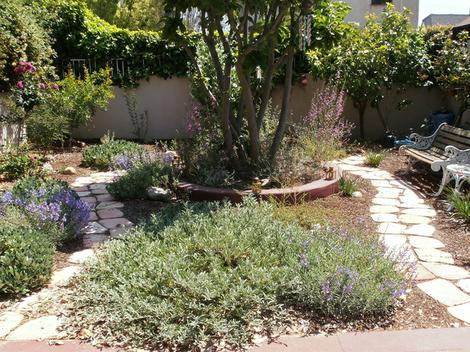 A Los Angeles native garden after 12 months. - grid24_12