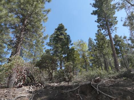 Looking at the forest south of Big Bear City - grid24_12