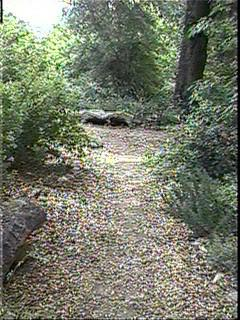 This is an old picutre of our garden path. The oak at the end of this picture has grown about another foot across the trunk and it is now shady. - grid24_12