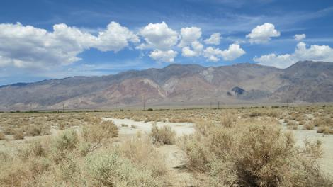 Atriplex polycarpa out in the old Owens Lake bed. - grid24_12