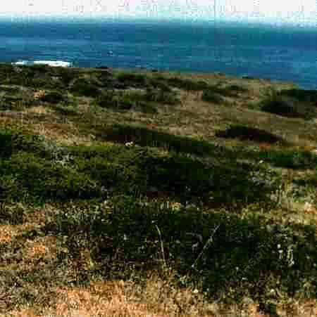 Coastal bluff, old photo of Ragged Point - grid24_12