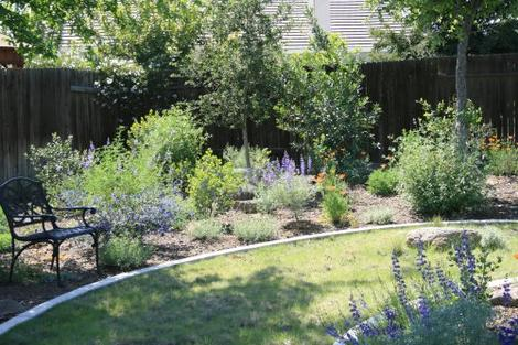 Lupines, buffalo grass, poppies in a Bakersfield native garden - grid24_12