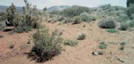 an old photo of Juniper Pinyon woodland - grid24_12