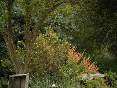 How To Design your garden Using Native Plants
