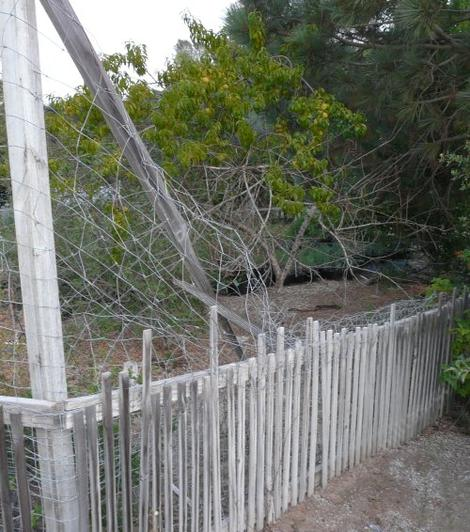 the deer broke the 2X4 at the top of this 8 foot fence and now it's a four foot fence - grid24_12