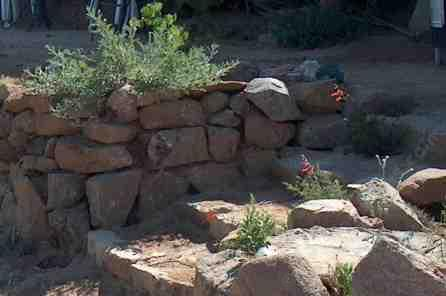 California fuchsia in rock steps - grid24_12