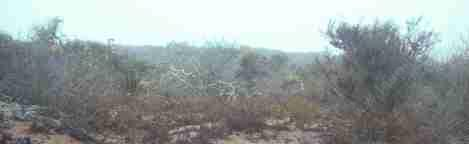 A picture of Los Osos coastal sage scrub in summer fog - grid24_12