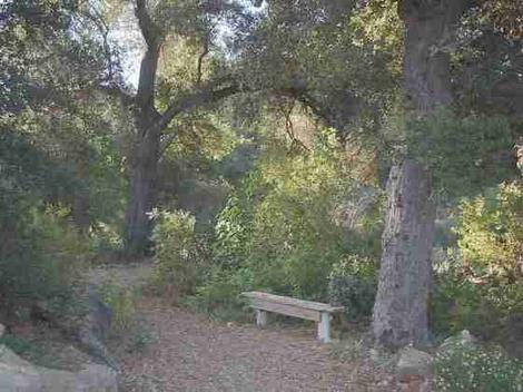 A garden bench under native Coast Live Oak  can create a natural setting in this California garden example. - grid24_12