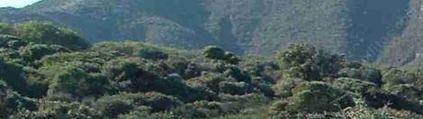A hillside of coastal sage scrub. Vast areas of Los Angeles basin probably looked like this. - grid24_12