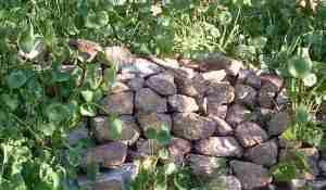 Dry stack wall with miner's lettuce - grid24_12