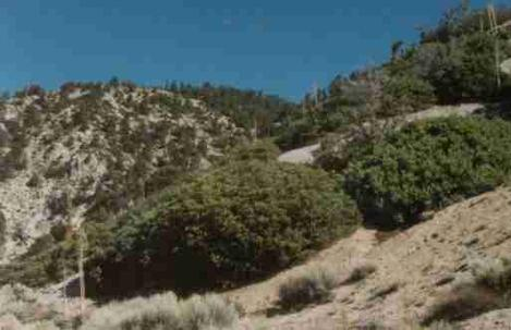 Pinyon Juniper woodland - grid24_12