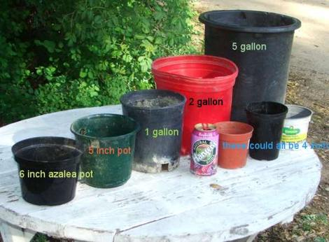 Pot sizes. The little  one to the right  the soda is what is commonly shipped mailorder. We ship the one to the left of the soda can, 1 gallons. All we grow are native plants and we grow them in a harsh site in Central California.. They'll LOVE your garden. - grid24_12