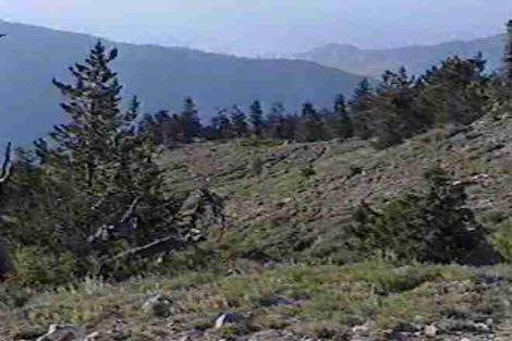 The to of Mt. Pinos is alpine, this is just below it and is Alpine Fell-Fields. - grid24_12