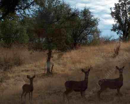 A List Of California Native Plants Tolerant Of Deer And Fire