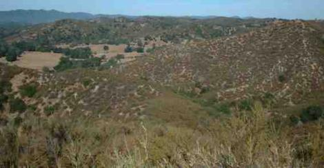 The chaparral behind our nursery about 12 years after a fire. Notice no trees in upper  burn area. - grid24_12