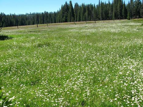 A Sierra meadow at 7500 feet. - grid24_12