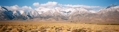 Sage brush community in Owens Valley, the plants are native Rabbit Brush and Big Basin Sage. - grid24_12
