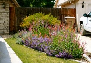 Charming A Native Plant Garden In Bakersfield, California   Grid24_12