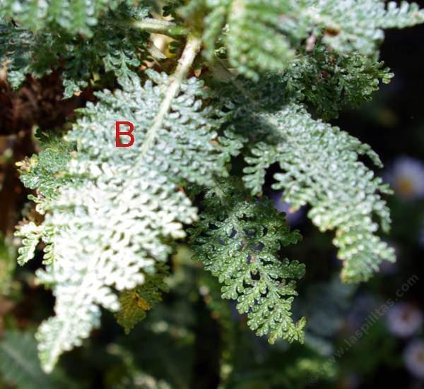 leaf taxonomy quiz