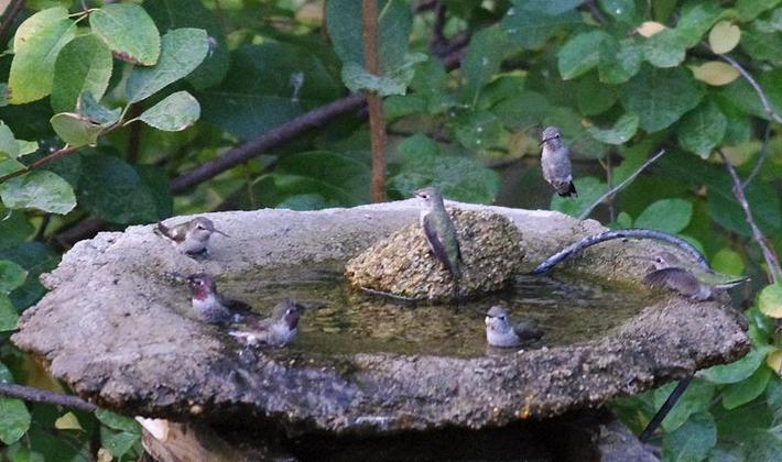 Easy Gardening News HOW TO CREATE A HUMMINGBIRD GARDEN
