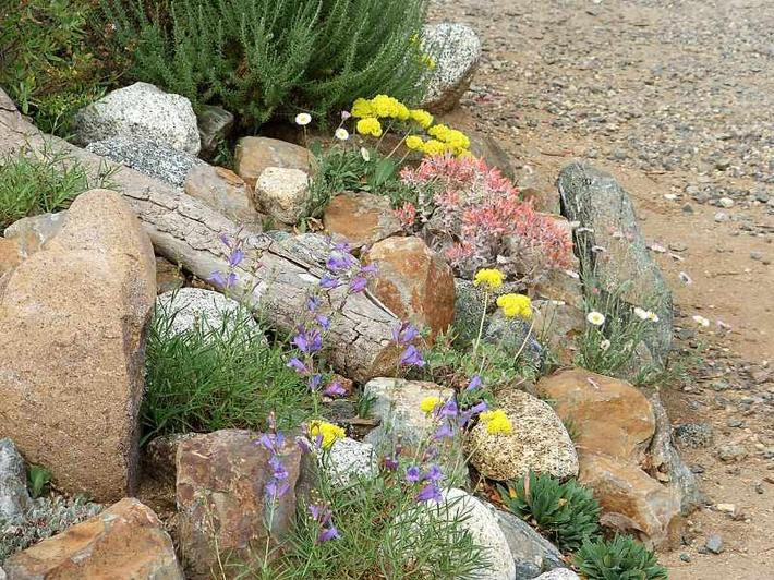 Southern California gardens can support all sorts of
