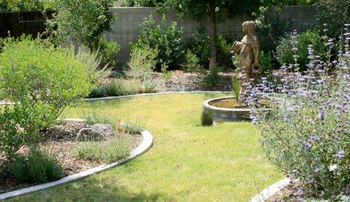 Steve's garden in Bakersfield, Buffalo grass lawn with Salvia Pozo Blue on one side and Big Berried manzanita on other.