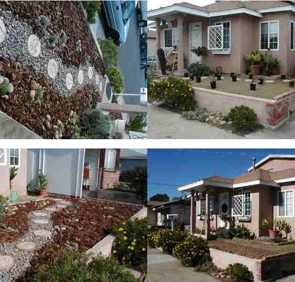 A little native plant landscaping in San Diego