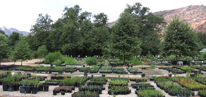 A view of the Escondido  nursery. All we grow are California native plants.