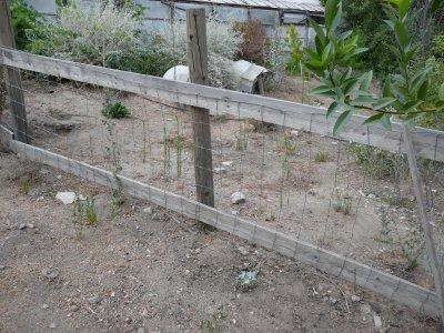 how to find invisible fence wire