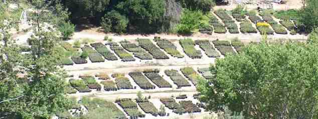 A California native plant nursery located between Paso Robles and San Luis Obispo. All we grow are native plants.