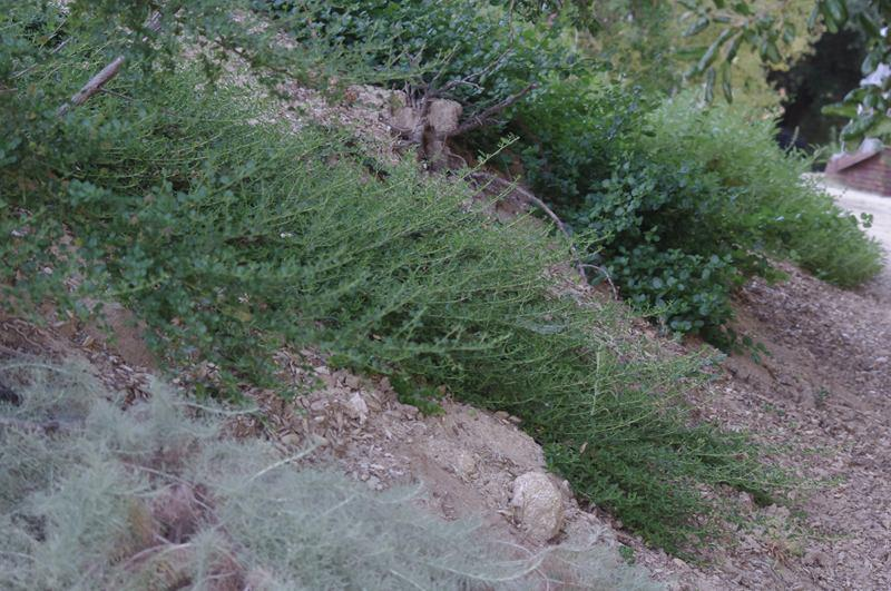 How to landscape a hillside slope to stabilize and control for Hillside landscaping plants