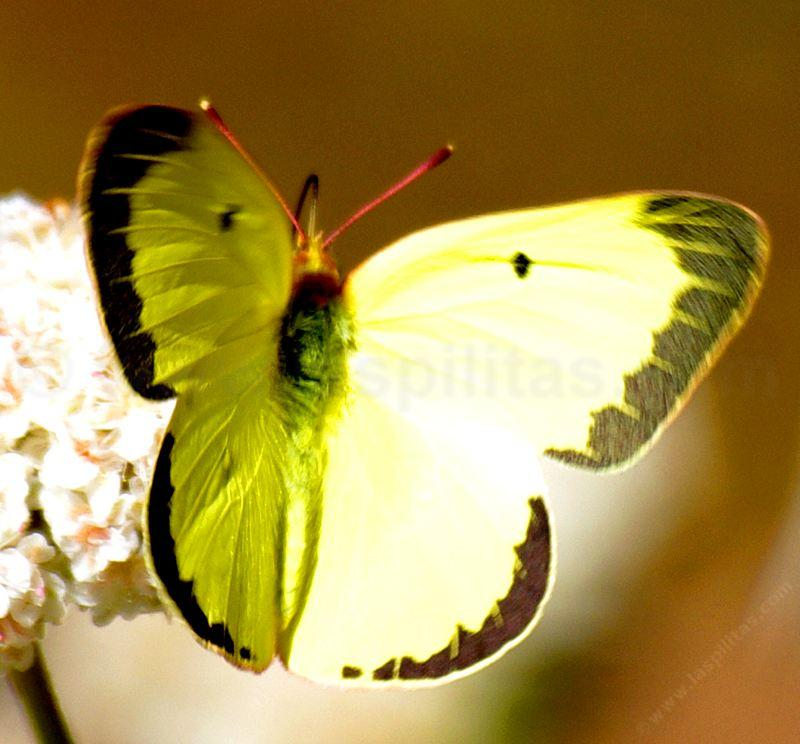 how to create a butterfly garden in california